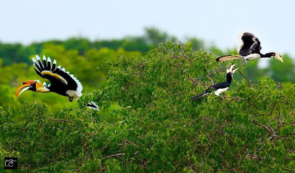 Arunachal Pradesh Birding Tours   Waytoindia.com
