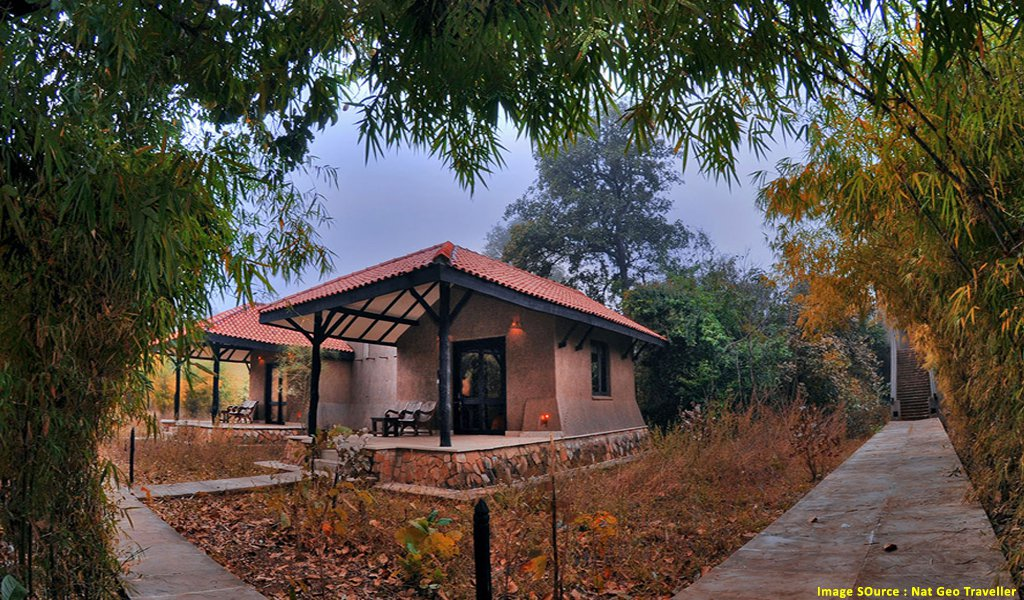 A Tryst with Wildlife at Bandhavgarh National Park