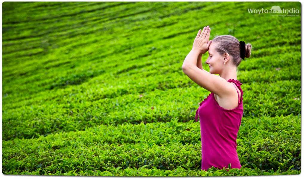 Tea Plantations in India : Munnar