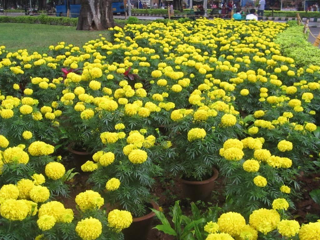 Dasara Flower Show in Mysore