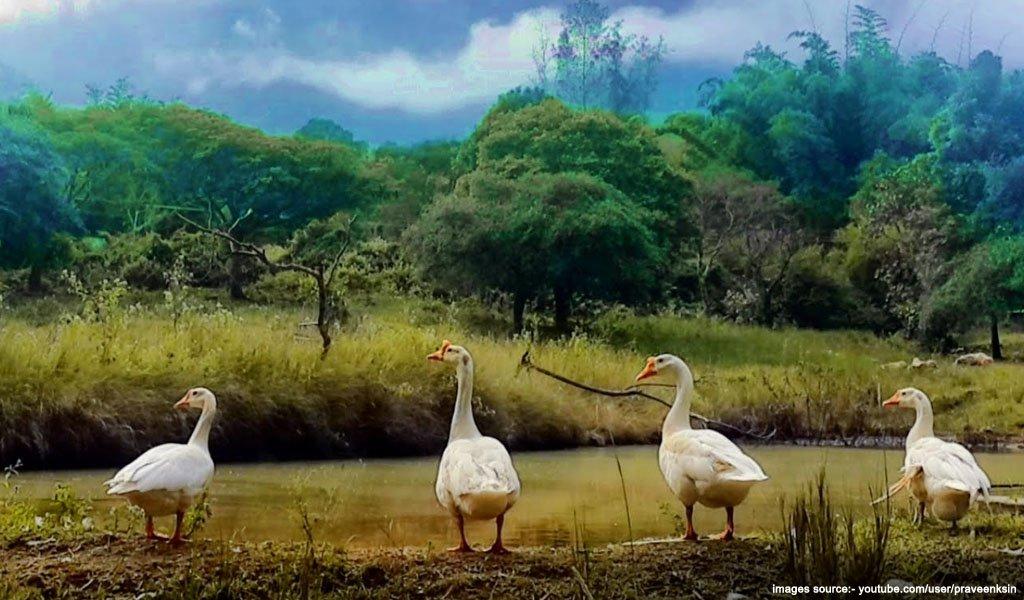 Jungle Retreat - Masinagudi