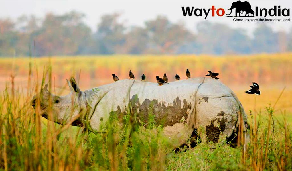 Kaziranga National Park : remote places in india