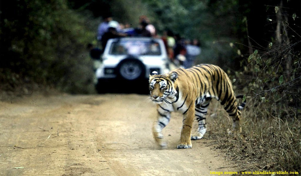 North India Tourist Places : Ranthambore