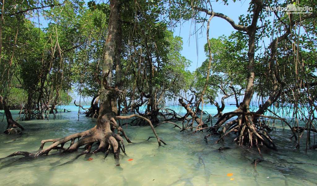 Ravishing Radhanagar Beach, Andaman and Nicobar