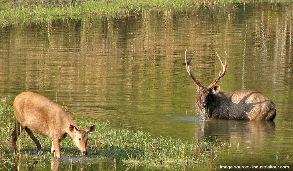 Satpura National Park, Madhya Pradesh