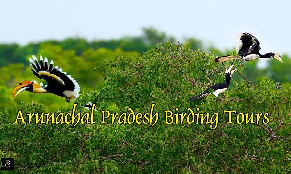 Arunachal Pradesh Birding Tours
