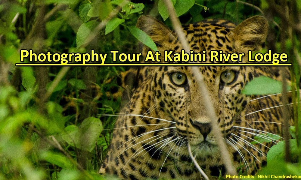 Kabini River Lodge