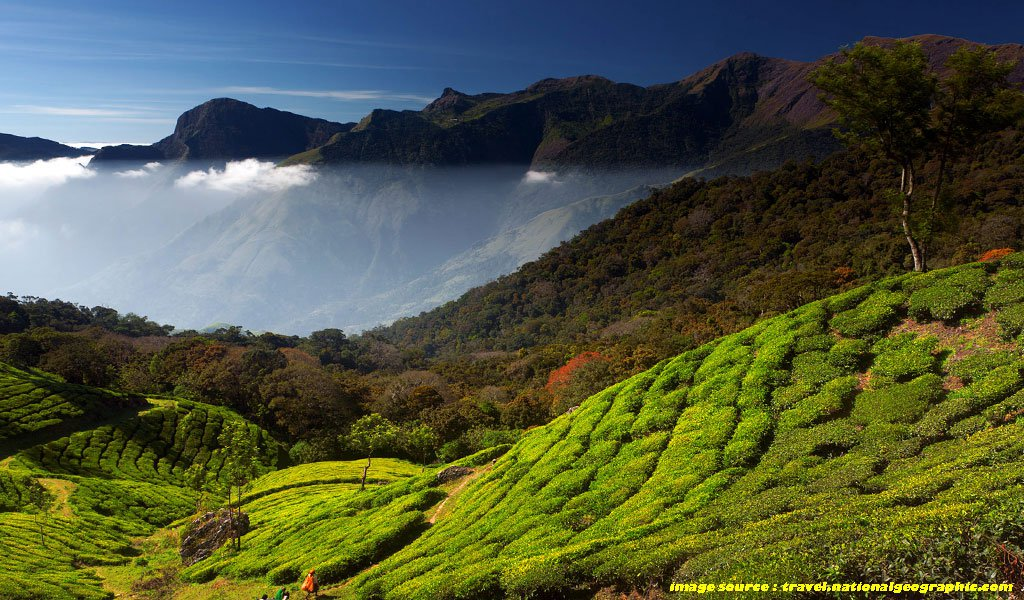 Best Places To Visit In Kerala : Munnar